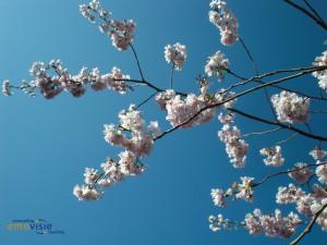 Voorjaar Emovisie