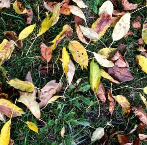 bladeren-emovisie